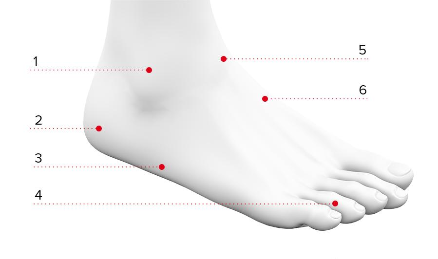 Anatomie nohy